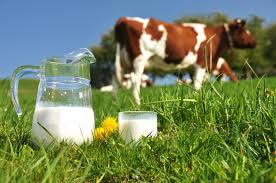 شیر خام و پاستوریزه